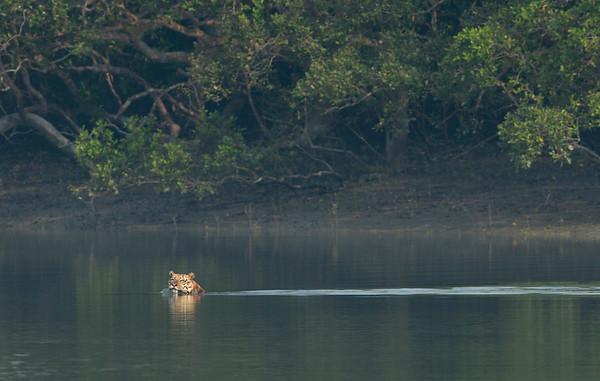 Sundarbans-Nov-2019