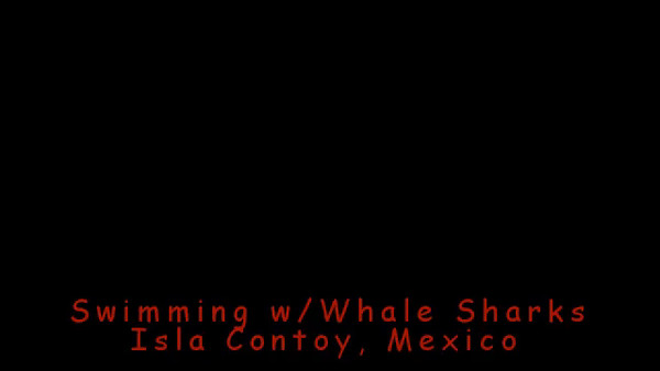 Whale Sharks.mp4