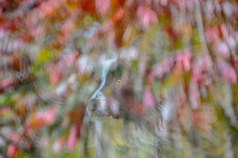 chien fenêtre couleurs d'automne