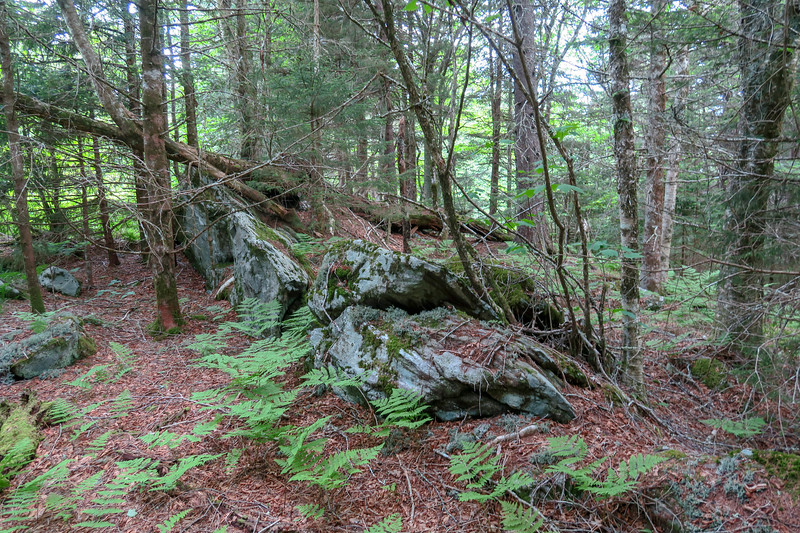 Green Mountain Trail -- 5,810'