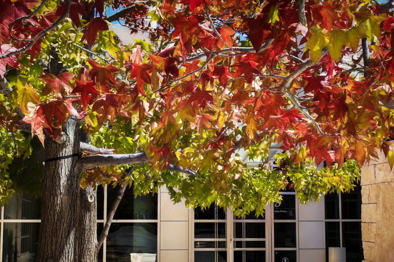 September 7 - Autumn is upon us, The Getty, Los Angeles.jpg