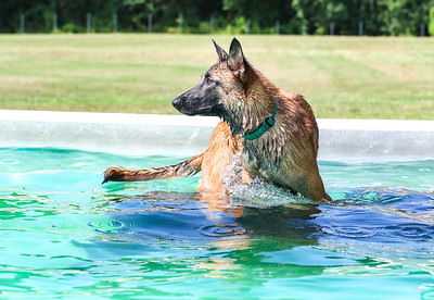 Ultimate Air Dogs - 6 August 2016
