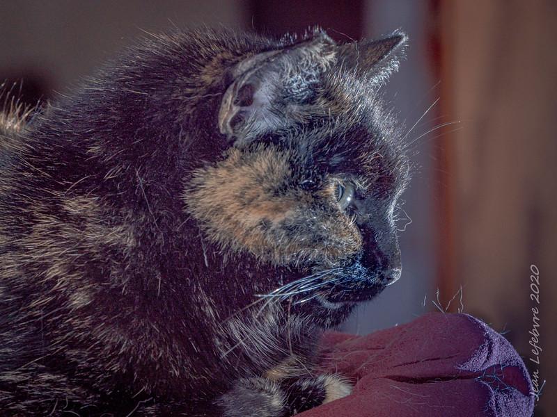 20200201-Cat_Gus-018