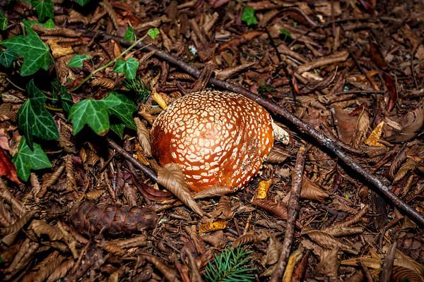 Mushroom_Hunt_2020
