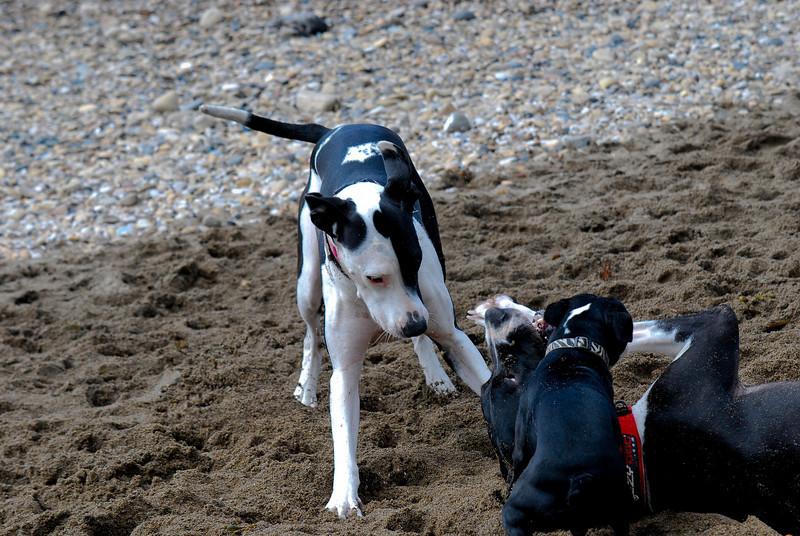 dogs_beach-015.jpg