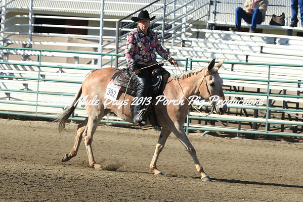 Friday Reining Classes