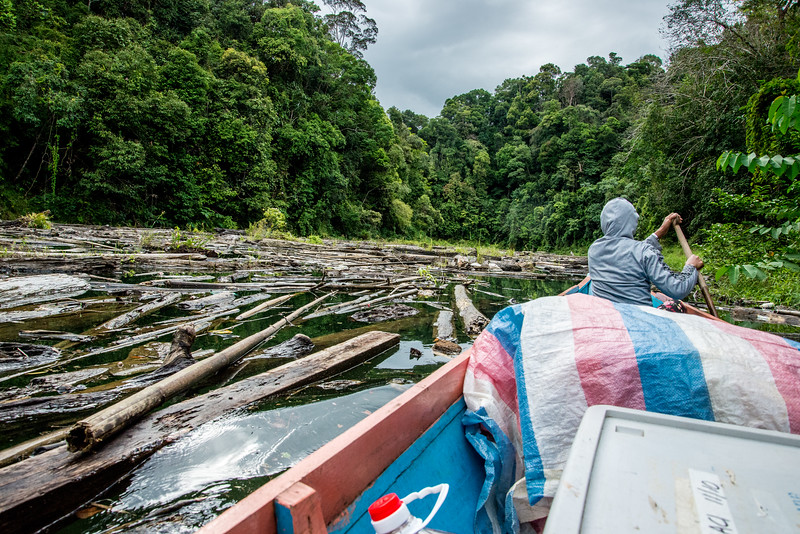 Timber on the Sungai Mekong