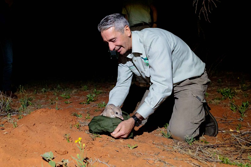Greater Bilby Release