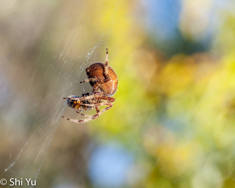 Spider_20131109_018.jpg