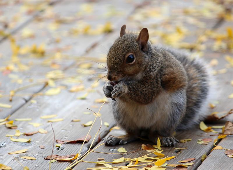 Squirrel5.jpg