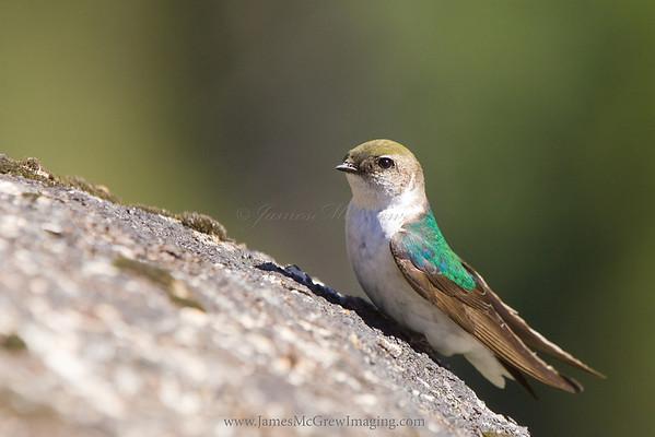 Yosemite Birds and Wildlife