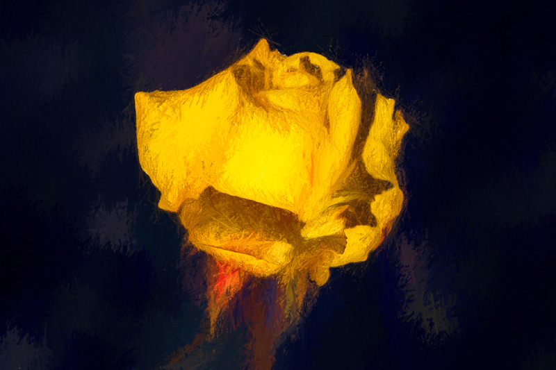 March 28 - The first yellow rose of spring-1.jpg
