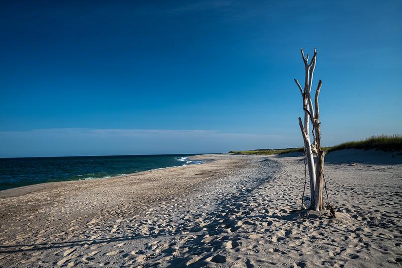 Nauset Beach w driftwood tree.jpg