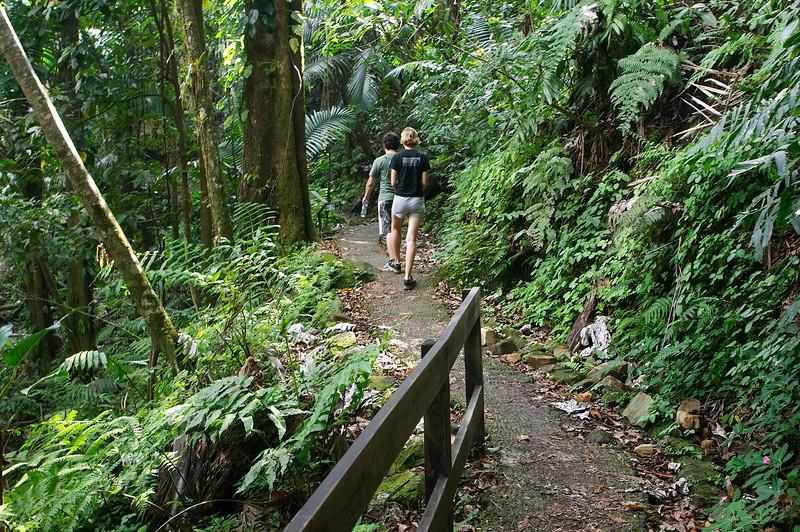Hiking through the greenery