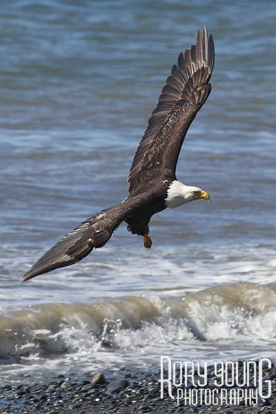 EagleWaves2.jpg
