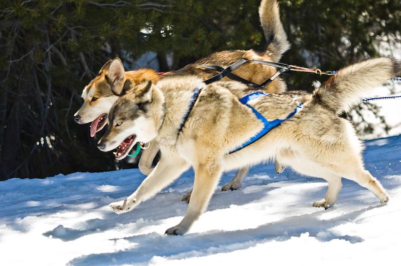 DogSled-143.jpg