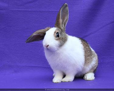 Adoption Rabbits