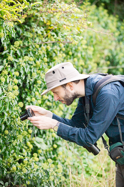 Photographing the Ivy Bees... there were a lot of them