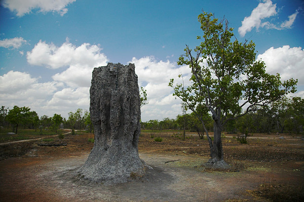 """Cathedrals of the North"" (Termite Mounds)"