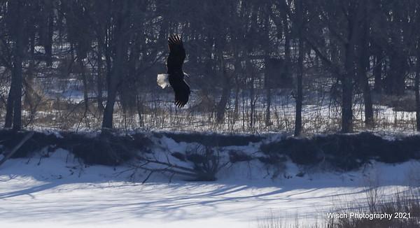 Eagles - Douglas Point Feb 28 2021