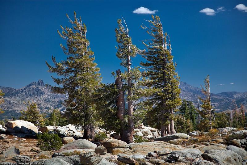 Grouse Lake Trail. A view of Mokelumne Wilderness.