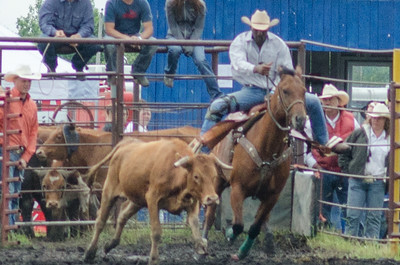 Steer Wrestling Sunday 2014