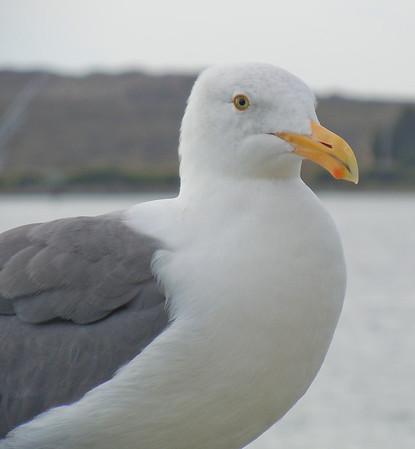 2010 CA Nov Bodega Bay
