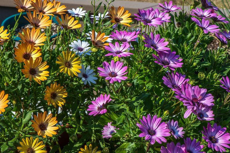 Flowers, et al