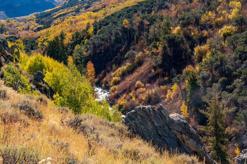 Fall Colors in Lamoille Canyon