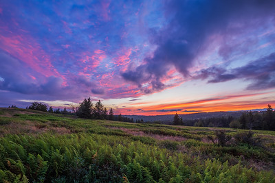 dolly sods, august 2019