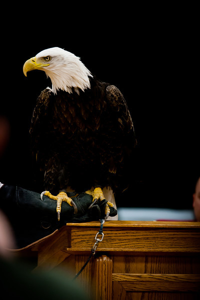 martin eagle-26.jpg
