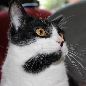 Cat pics 2007-2010