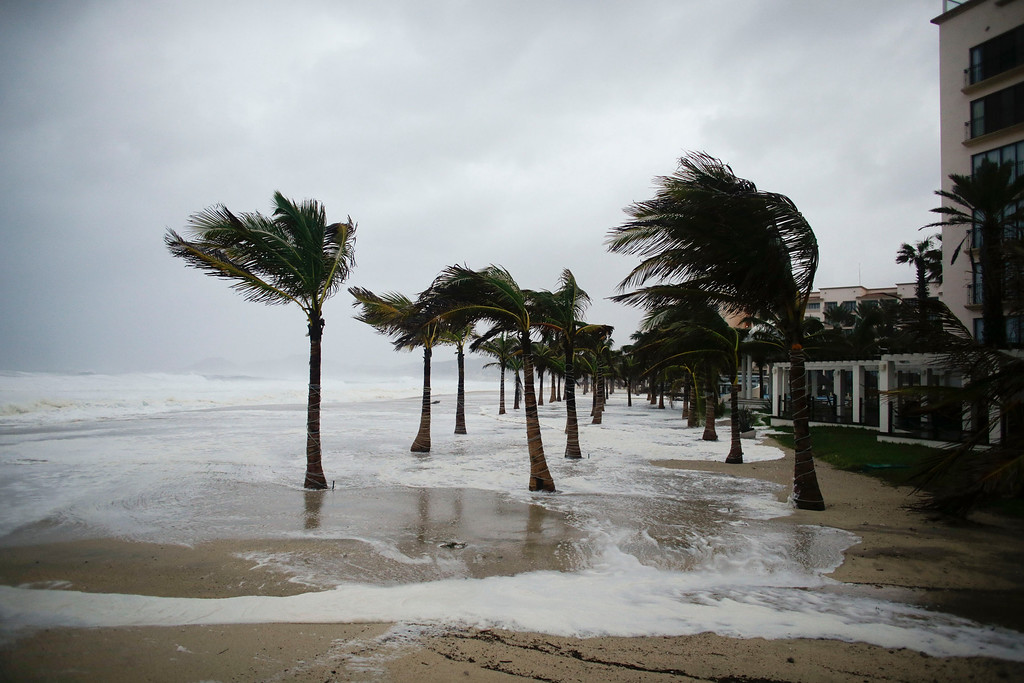 . Winds blow palm trees on the beach in Los Cabos, Mexico,  Sunday, Sept. 14, 2014. Hurricane Odile turned into a Category 4 hurricane and it\'s expected to make a close brush with the southern portion of Mexico\'s Baja California peninsula Sunday evening. (AP Photo/Victor R. Caivano)