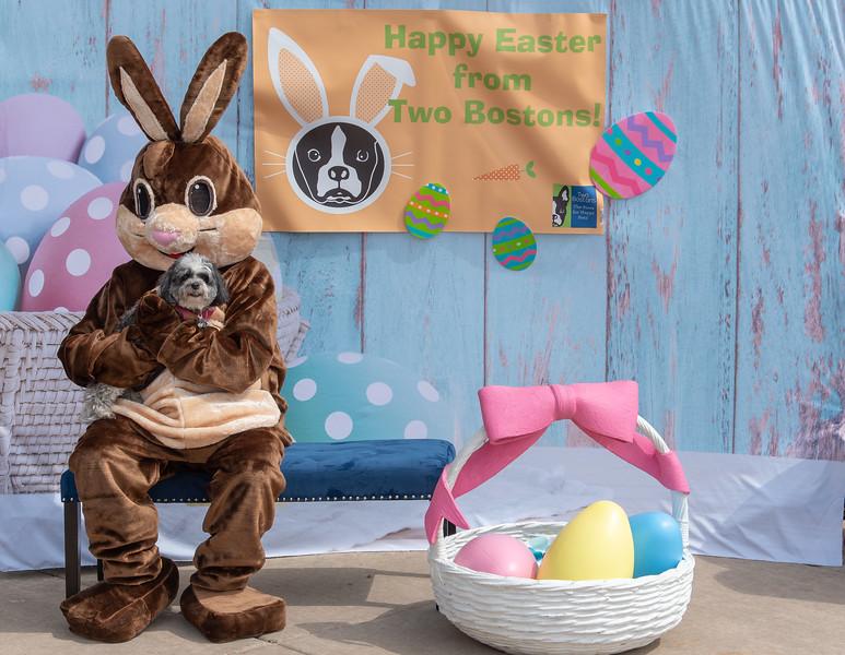 Easter2019TwoBostons-8223.jpg