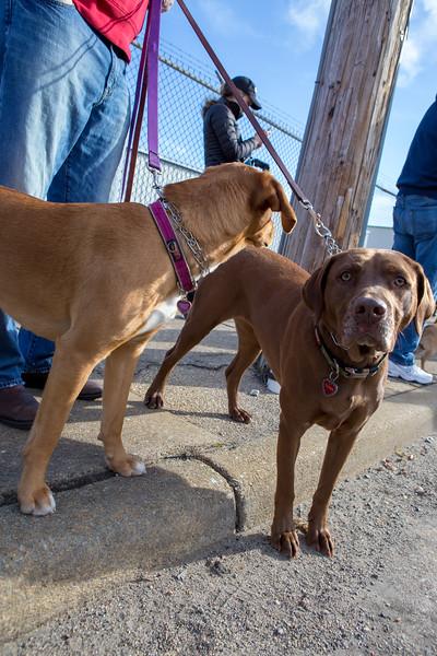 Richmond Spca Dog Jog 2018-63.jpg