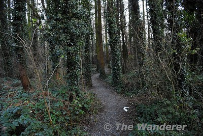 Garrykennedy Woods - Sunday 20th December 2020