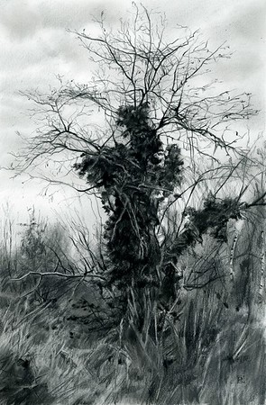 """""""Old friend"""" (charcoal and graphite) by Rosanna Gaddoni"""