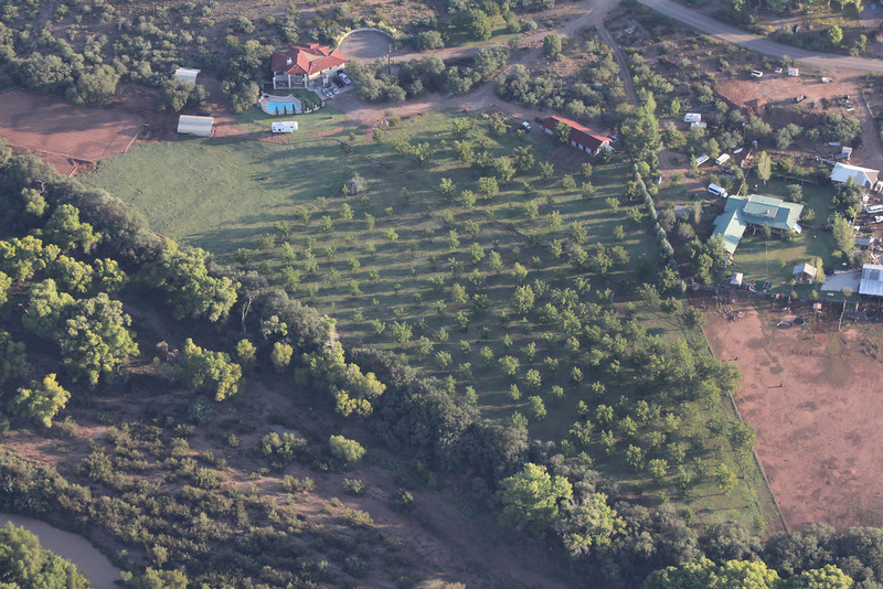 view of small orchard from our balloon
