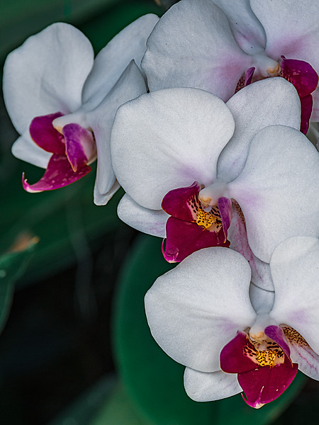 IMGP6264-Edit_CoolFlowers_1227_18.jpg