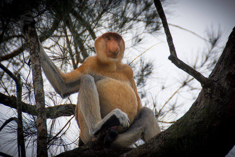 Borneo-2014-164.jpg