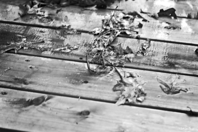 rain on the deck bw_L_12509