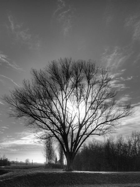Tree at Sunset - Nonantola, Modena, Italy - December 21, 2011