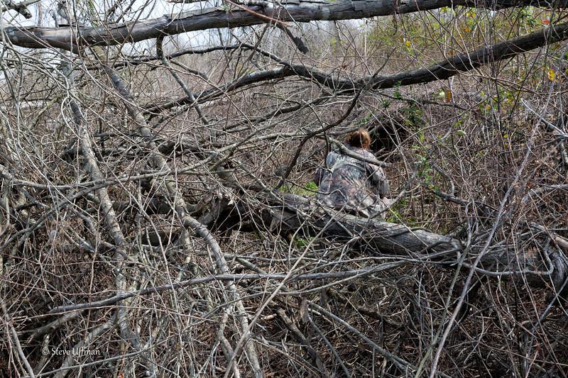20150315-_Q2C5152Wildsville-bears-Edit.jpg