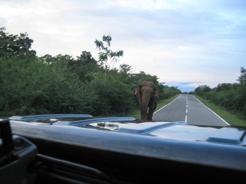 Sri_Lanka17-9782.jpg