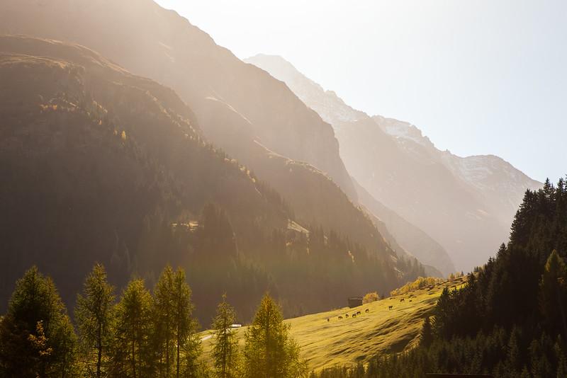 Herbst-im-Rheinwald-D-Aebli-019.jpg