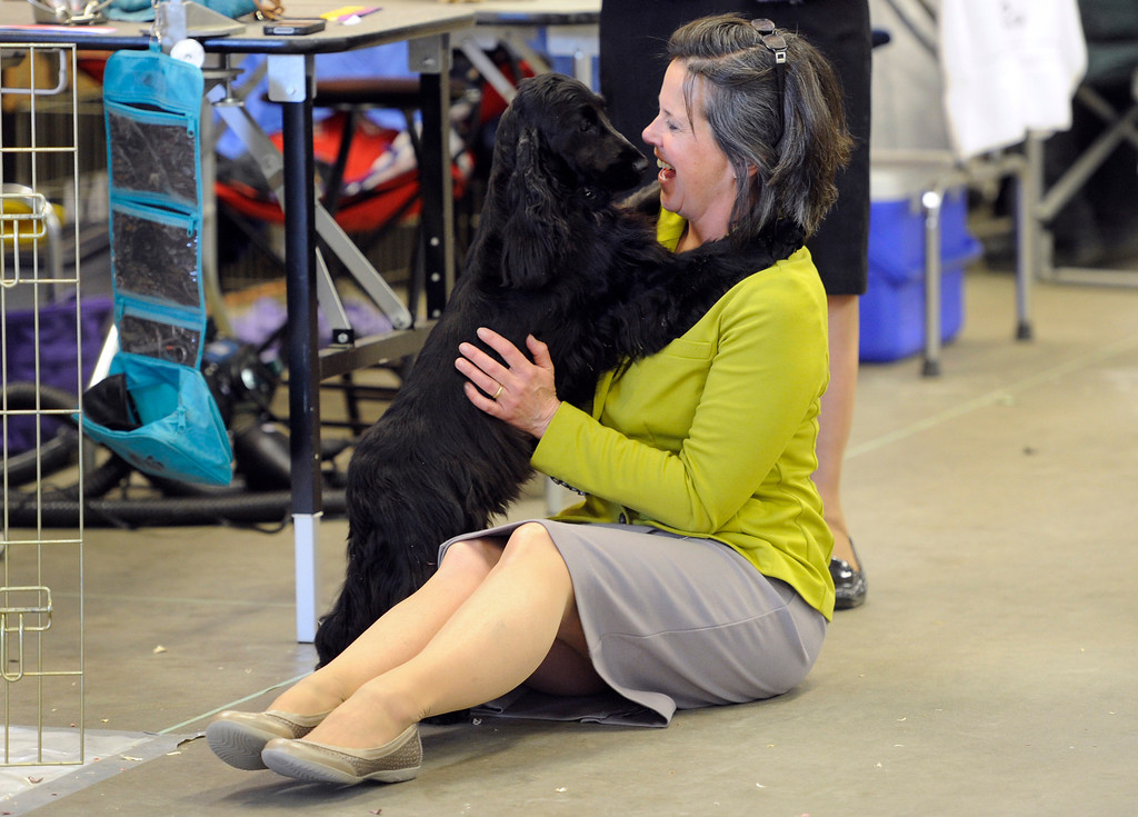 """. DENVER, CO. - FEBRUARY 15: Helen Reinhardt from Scottsbluff, NE visits with her English cocker spaniel \""""Ebonwood Zenobia\"""". The 18th annual Rocky Mountain Cluster Dog Show begins at the National Western Complex with over 150 different breeds showing. The dogs can be seen in conformation, obedience, and agility competitions which has dogs running through tunnels, and leaping over jumps. The show runs through Feb. 18 and is open to the public. (Photo By Kathryn Scott Osler/The Denver Post)"""