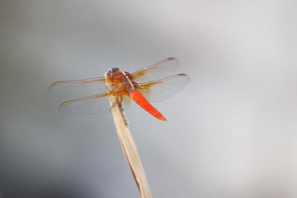 Dragonfly 2011