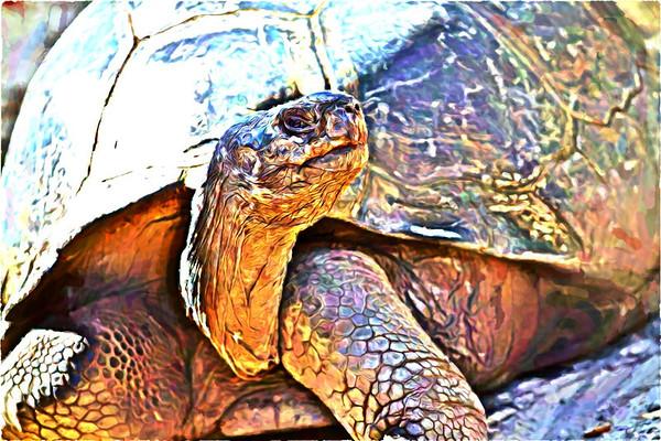 Mr. Tortoise