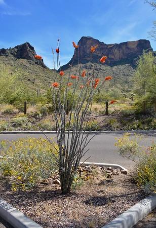 Tucson Trip.     4-9-19