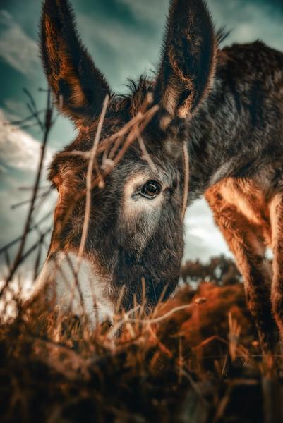 burro.jpg